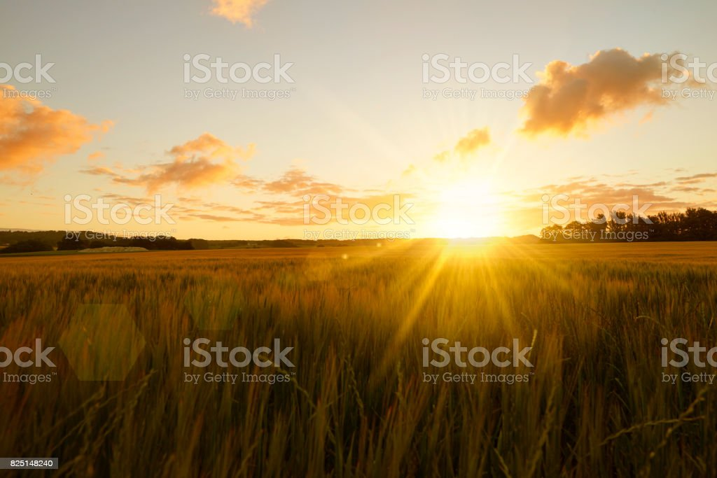 Sunrise over field stock photo
