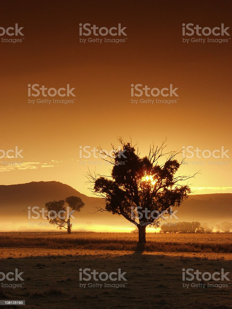 Sunrise Over Field with Trees stock photo