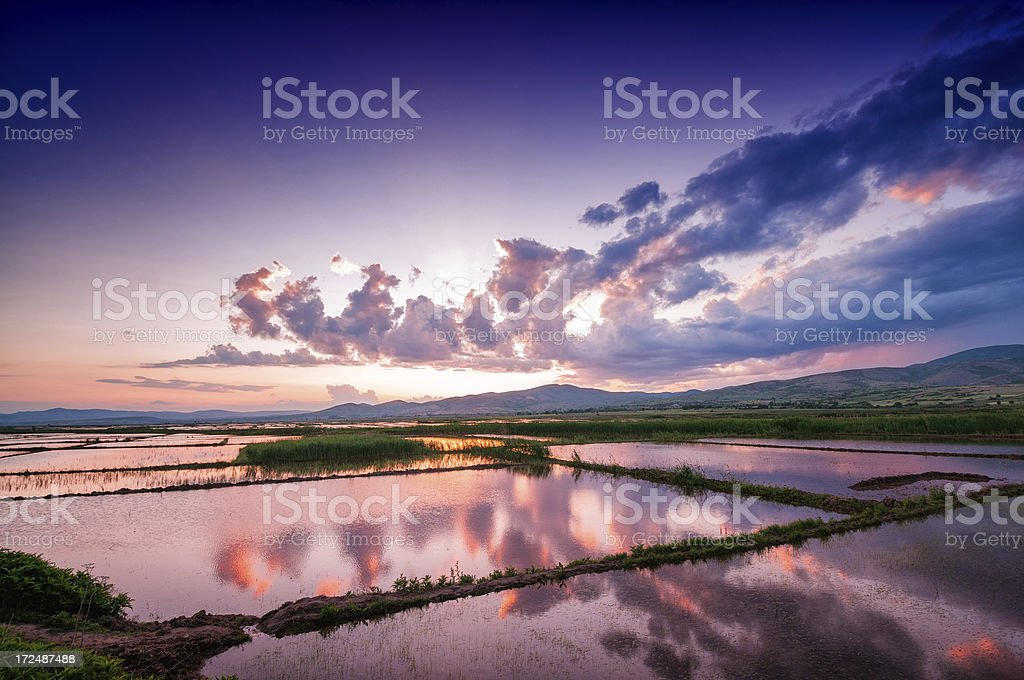Sunrise over Fresh Watered Rice Fields royalty-free stock photo