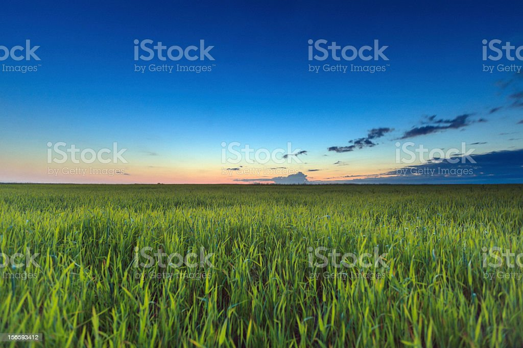 Sunrise over green field stock photo