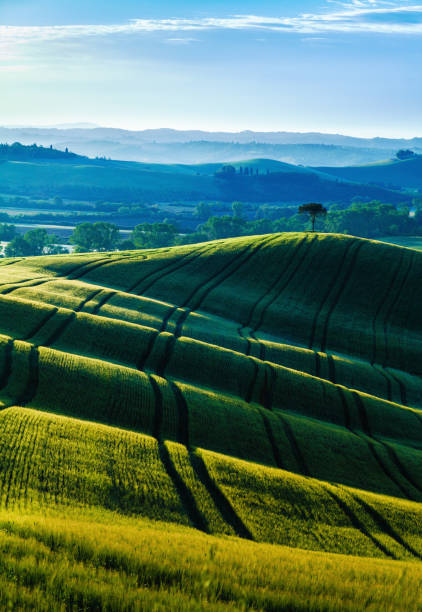Sunrise over green hills in Tuscany stock photo