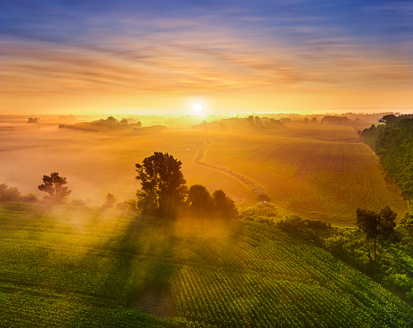 Sunrise over rural misty fields of corn, with trees casting long shadows in the fog.