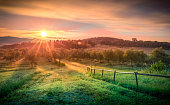 Sunrise over olive field in Tuscany, Italy