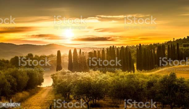 Sunrise over olive field picture id914530774?b=1&k=6&m=914530774&s=612x612&h=7nnpdeqaa0adngi3x5xaalov45hqei2ypn0ian9arzc=