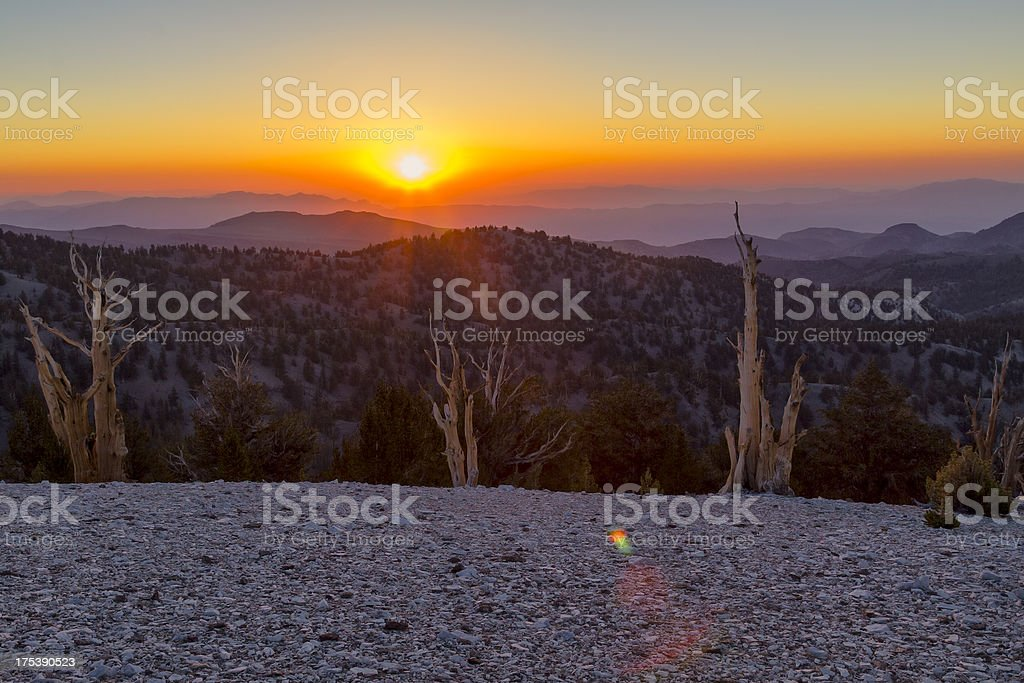Sunrise over Patriarch Grove stock photo