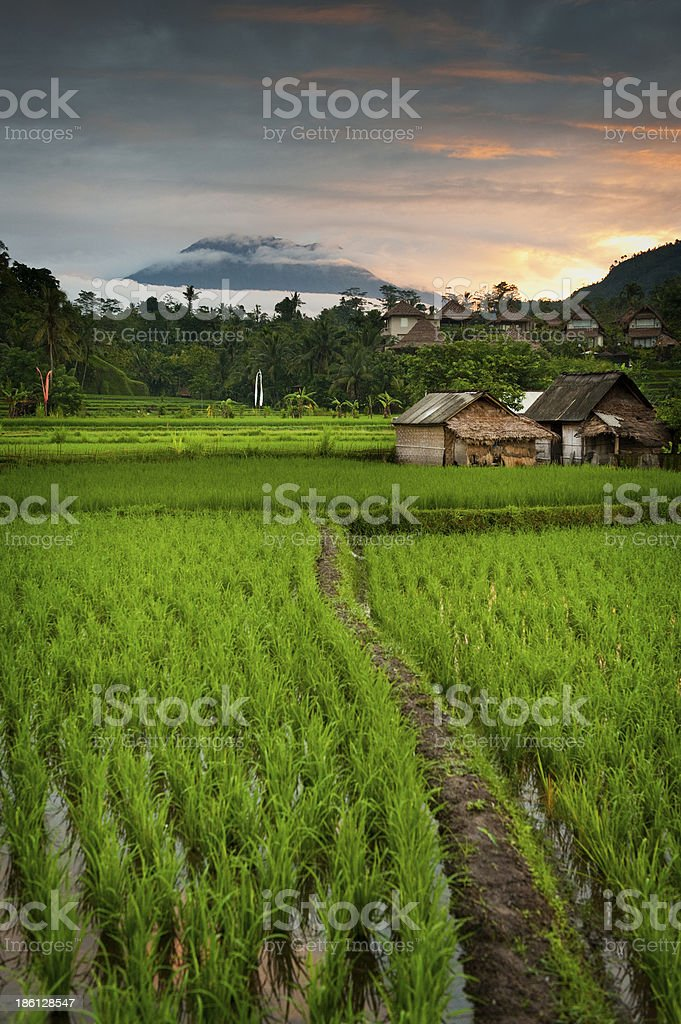 Sunrise over the Bali Rice Fields. royalty-free stock photo
