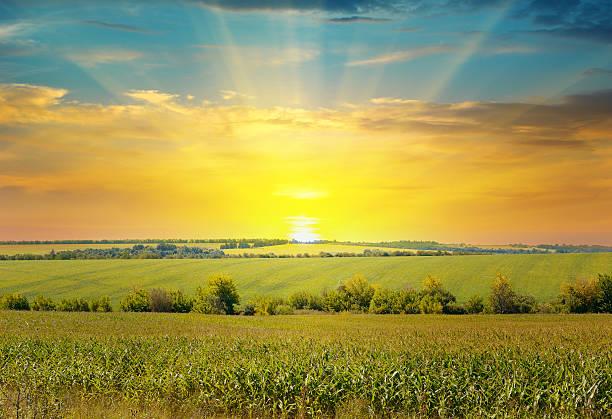 Sonnenaufgang über dem corn field – Foto