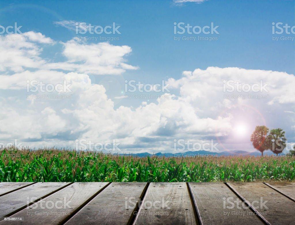 lever du soleil sur le champ de maïs avec plancher en bois photo libre de droits