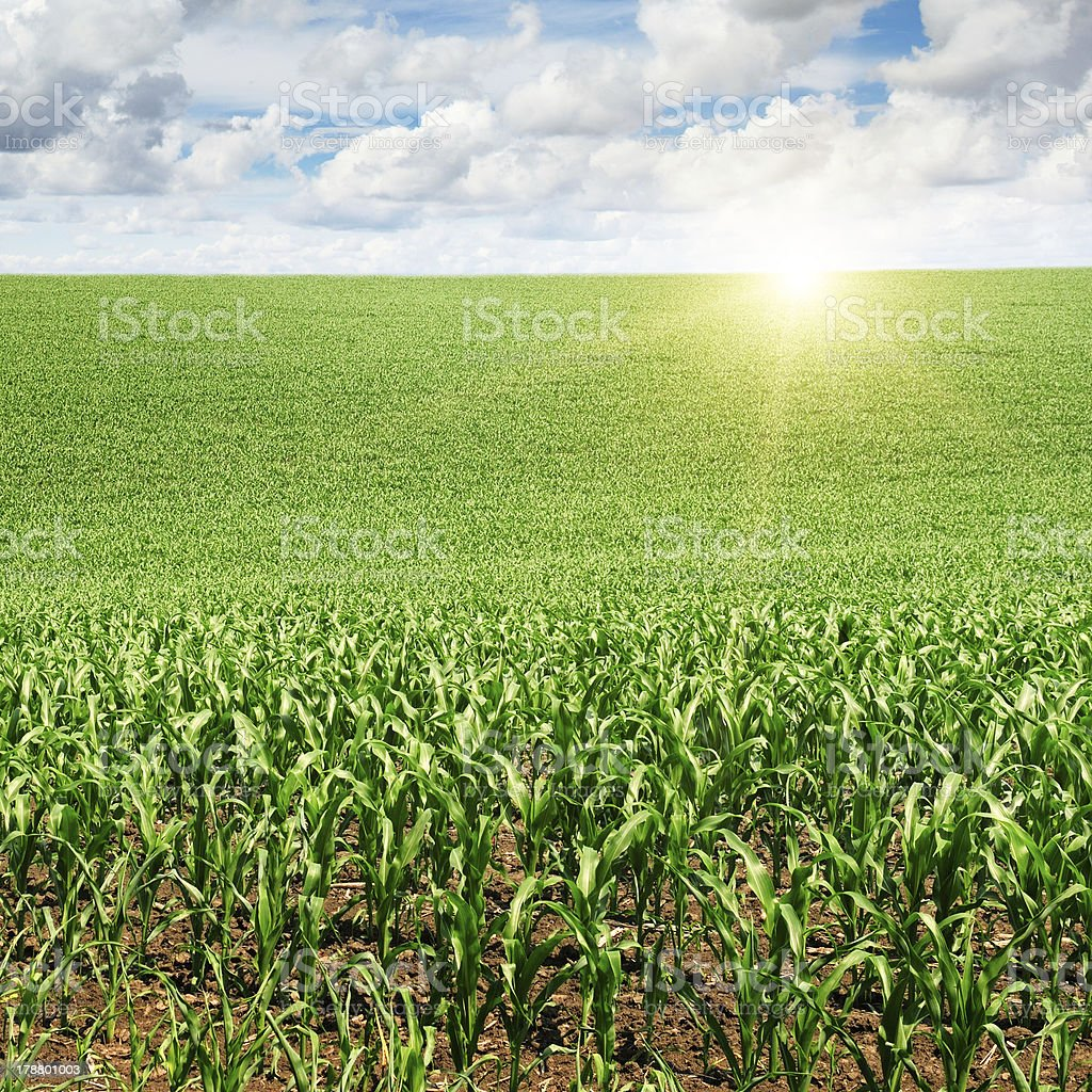 sunrise over the field royalty-free stock photo