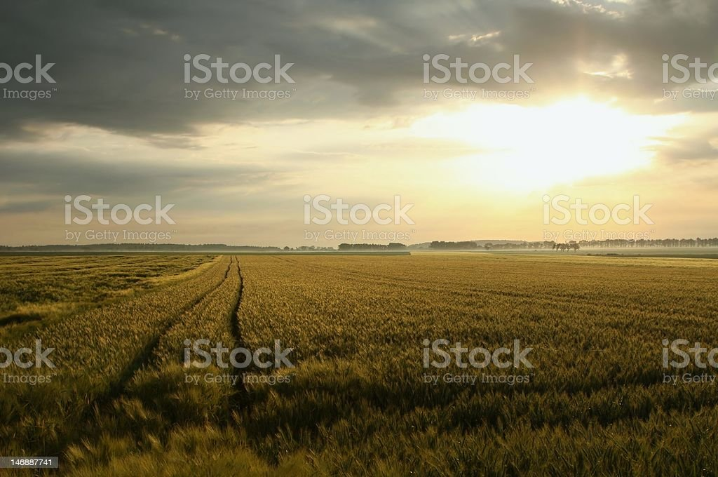 Sunrise over the fields royalty-free stock photo