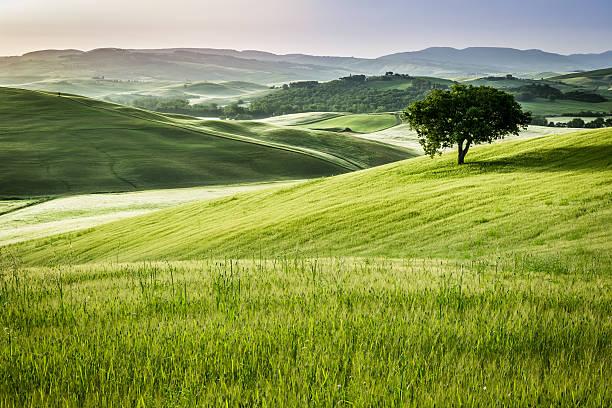 Lever du soleil sur les champs de verdure en Toscane - Photo