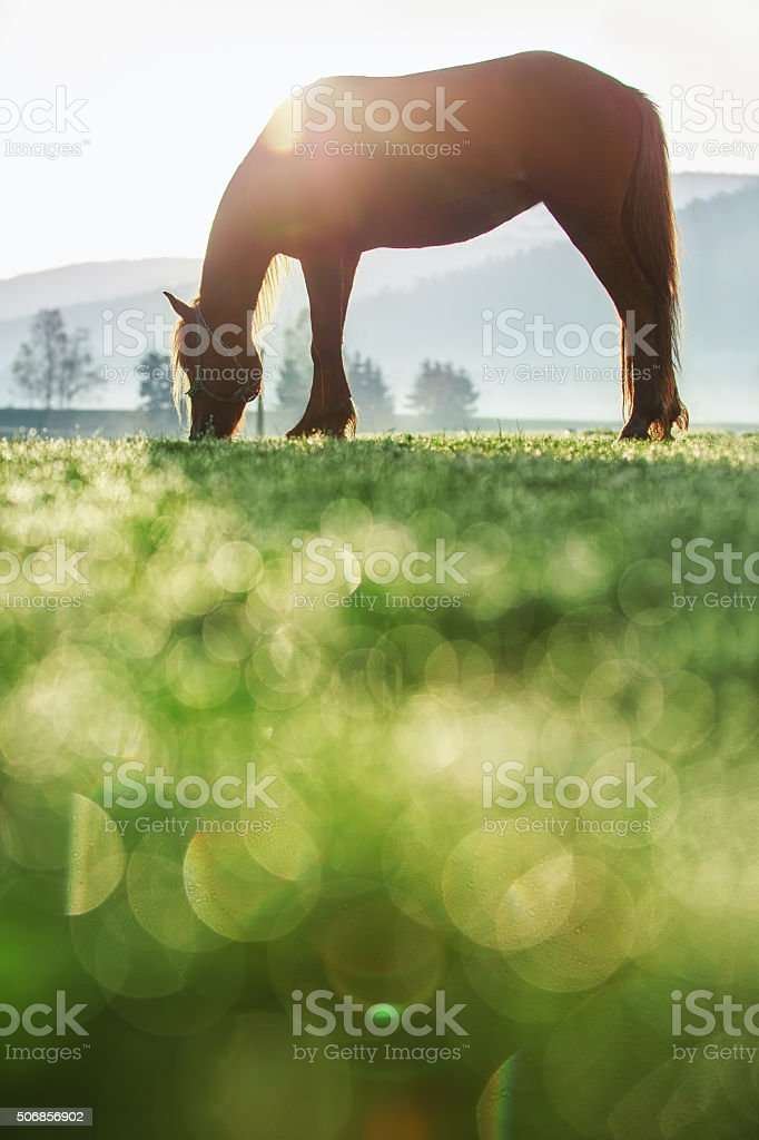 Sunrise over the mountain. Wild horse grazing in the mead stock photo