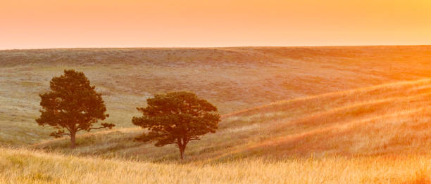 sunrise over the prairie in south dakota - great plains stock photos and pictures