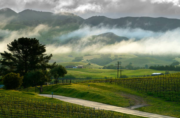 sunrise over the vineyards after heavy winter rains - central coast california stock photos and pictures