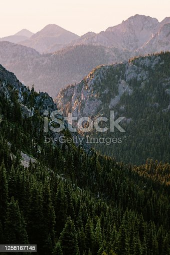 A stunning sunrise view of wildflowers in the morning overlooking a forest valley. Shot in Washington state on the Olympic Peninsula.