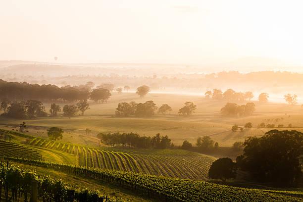 sunrise over vineyards - vineyard bildbanksfoton och bilder