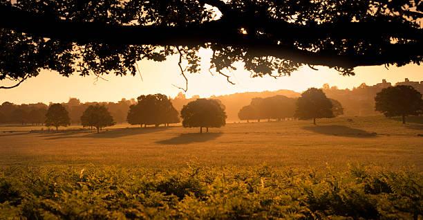 sunrise - richmond park stock photos and pictures