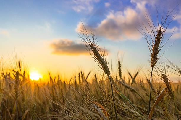 Lever du soleil  - Photo