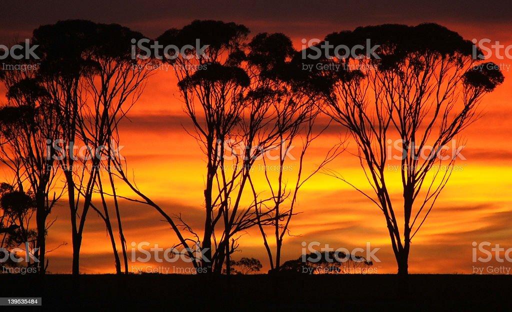 Sunrise reds royalty-free stock photo