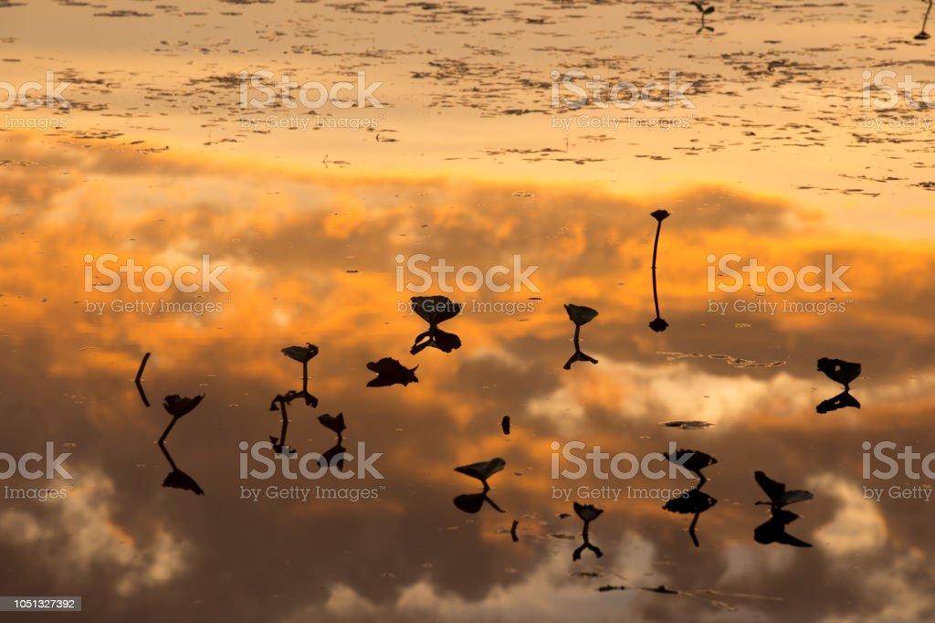 Sunrise reflections on a pond stock photo