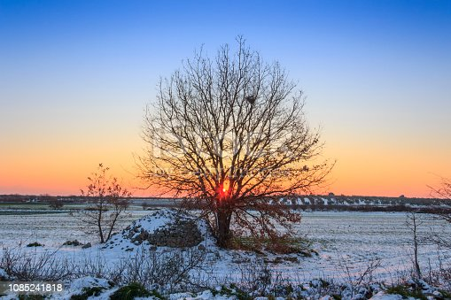 1034754000istockphoto Sunrise rising between the branches of a lonely tree in a snowy field. 1085241818