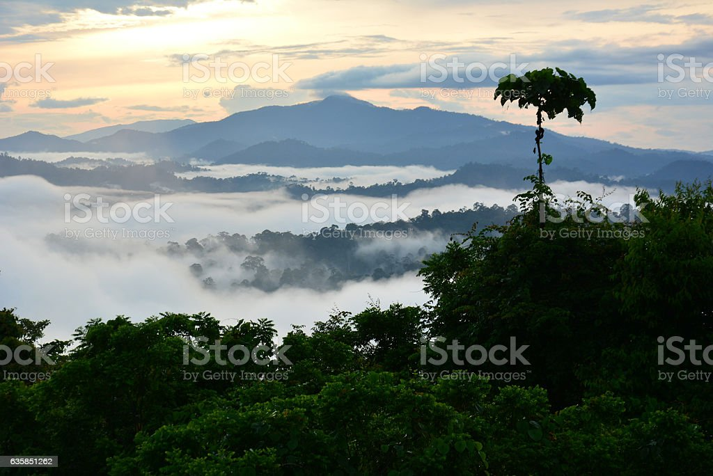 sunrise scenery in Danum Valley, Sabah Borneo – Foto