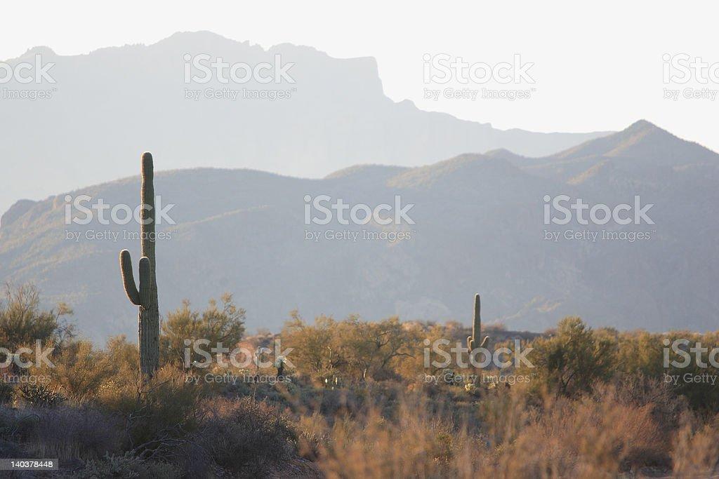 Sunrise Seguaro stock photo