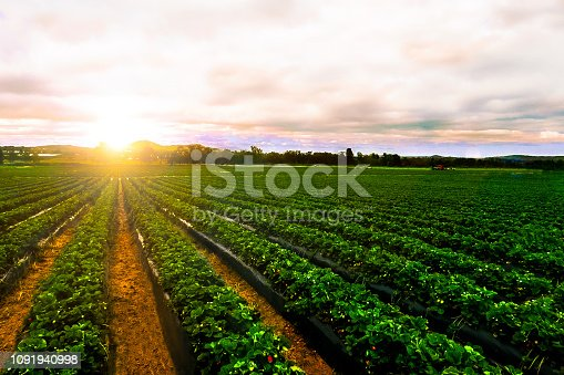 country countryside farming farmland field food fresh fruit background textured wallpaper inspiration design Australia