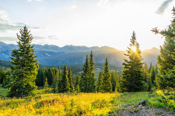 Sunrise sunlight sunburst through tree in San Juan mountains in Silverton, Colorado in 2019 summer morning with forest landscape view Sunrise sunlight sunburst through tree in San Juan mountains in Silverton, Colorado in 2019 summer morning with forest landscape view san juan mountains stock pictures, royalty-free photos & images