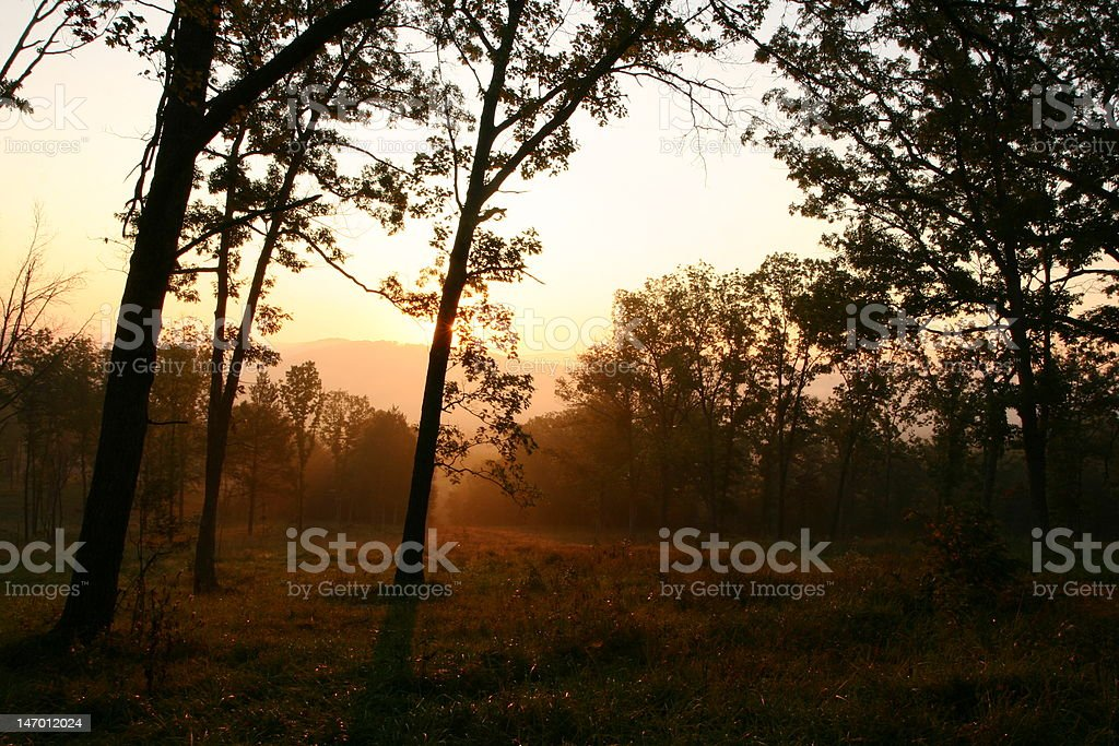sunrise thriugh the forest stock photo