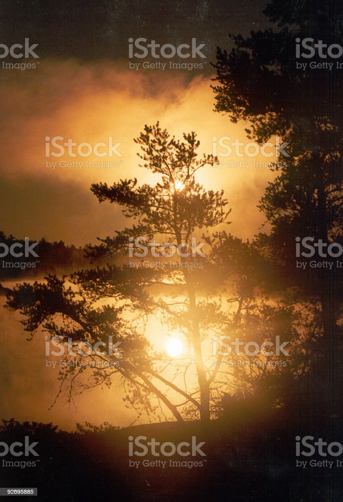 Sunrise a Jack Pine tree - foto de stock