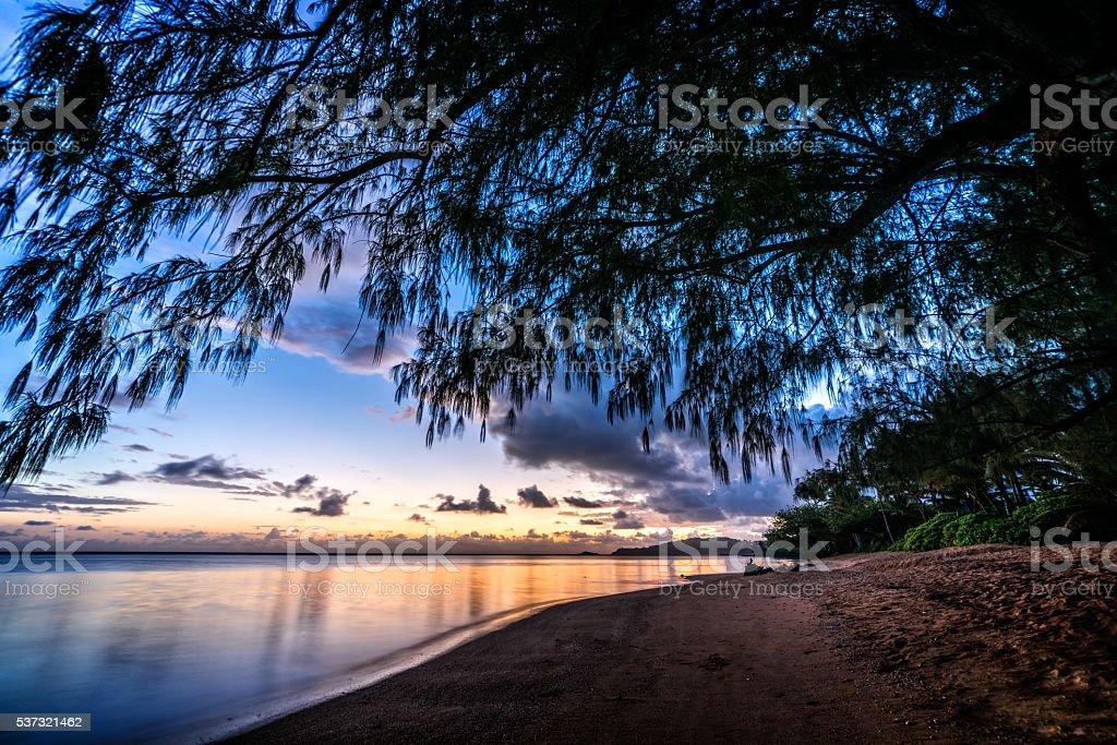 Sunrise Under the Shady Tree stock photo