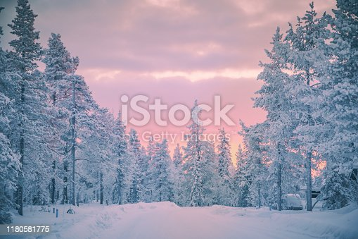 Beautiful pink color winter sunset landscape with snowy forest big pine trees covered snow from Levi, Lapland, Finland
