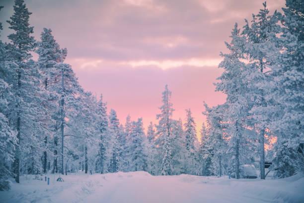 ラップランド、フィンランドからの冬の雪の森の日の出の景色 - ツンドラ ストックフォトと画像