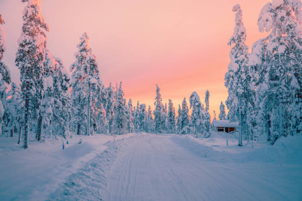 Sunrise view in winter snowy forest from Lapland, Finland stock photo