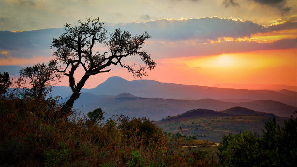 Sunrise View over Savannah in South Africa Majestic and Beautiful Sunrise View over Savannah in South Africa in Kruger Park kruger national park stock pictures, royalty-free photos & images