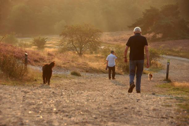 Sunrise walk with dogs picture id1206714706?b=1&k=6&m=1206714706&s=612x612&w=0&h=pfkvtktleecfiylcvg xjjcmp2iax9f0160k6gfeohm=