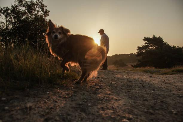 Sunrise walk with dogs picture id1206715108?b=1&k=6&m=1206715108&s=612x612&w=0&h=mbfwz8clrrqpbp9zvue4cfr22geposnzerra3dz3xts=