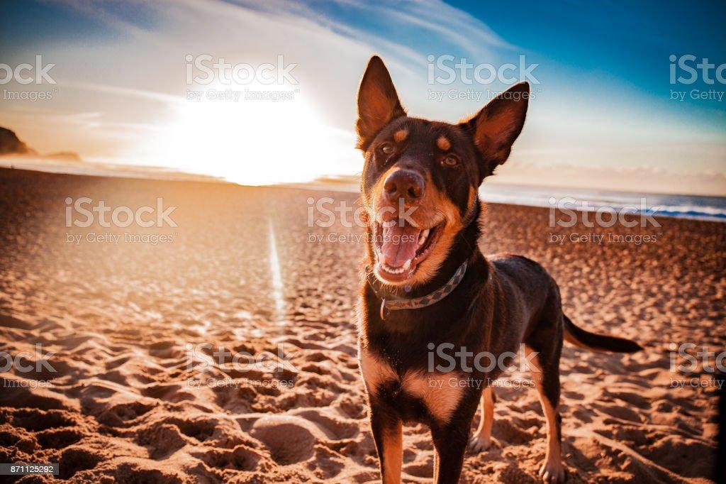 Sunrise Walkies stock photo