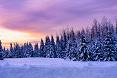 Snow covered trees sunset sky. Horizontal winter landscape