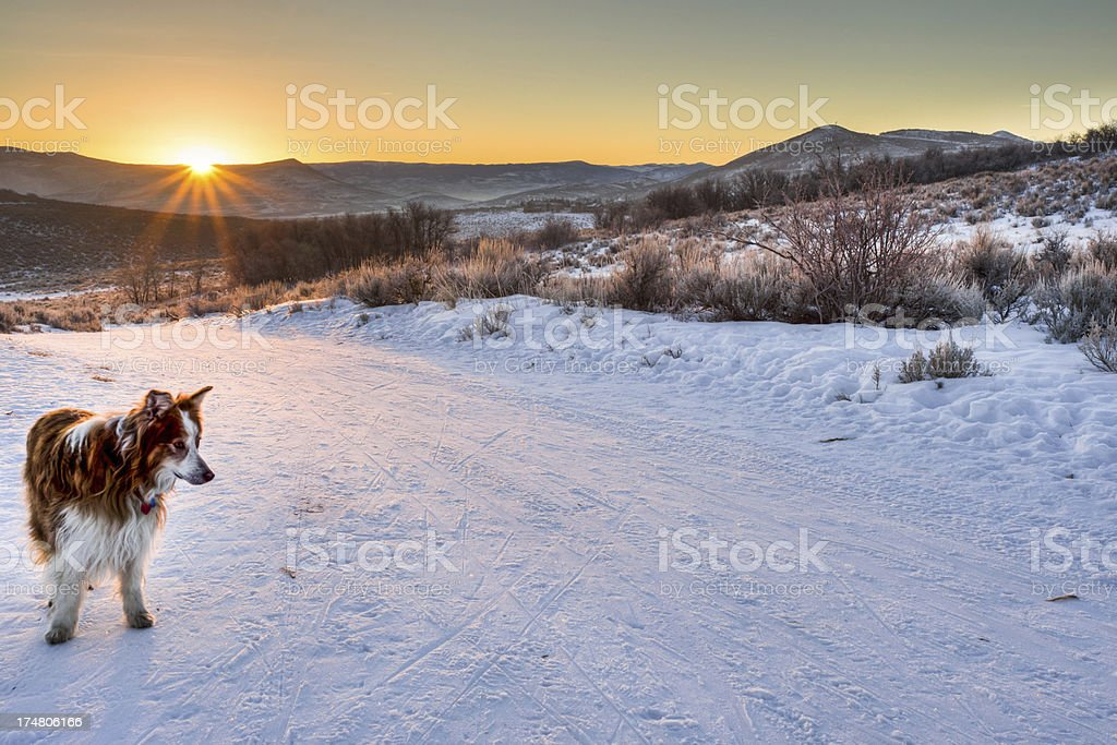 Sunrise with a dog in snow covered desert royalty-free stock photo