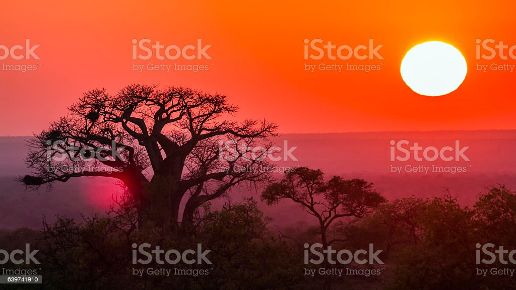 Sunrise with baobab in Kruger National park, South Africa stock photo