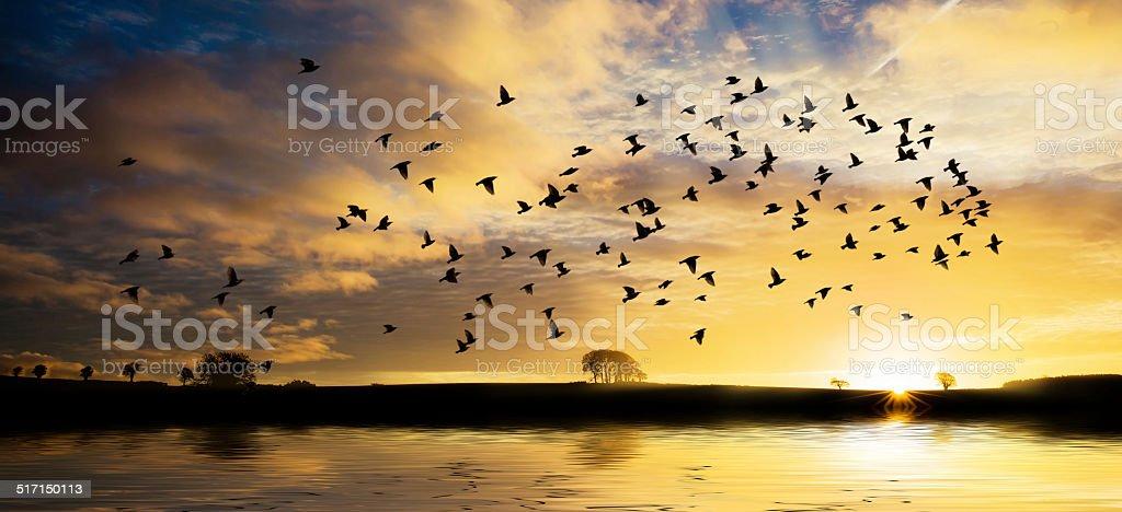 Sunrise with flock of birds stock photo
