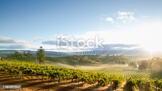 Sunrise overlooking a vineyard in Lake County, a tranquil, scenic Northern California wine district.