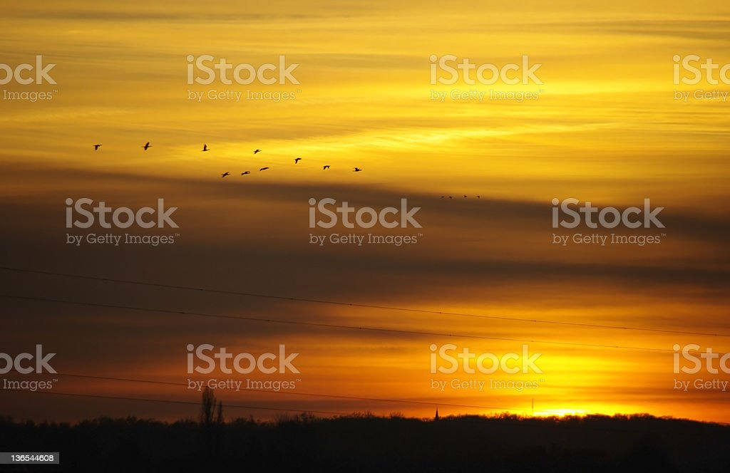 Sunrise with passing geese royalty-free stock photo