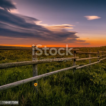 Sunrise with a single daisy by a wood fence with orange skies and storm clouds, Alberta Canada.