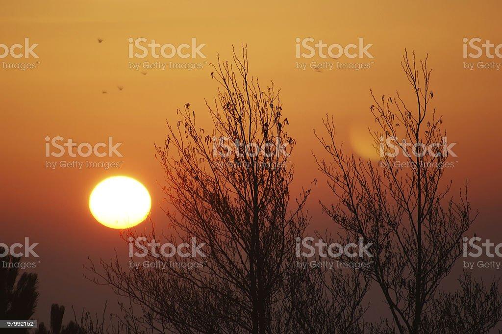 Sunrise with Trees royalty-free stock photo
