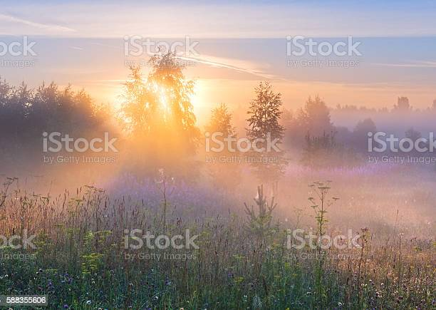 Suns rays in fog through branches of tree picture id588355606?b=1&k=6&m=588355606&s=612x612&h=tz p1lzzxtdgupt3 2rn8qegcxvywctvdmk9gzs81l8=