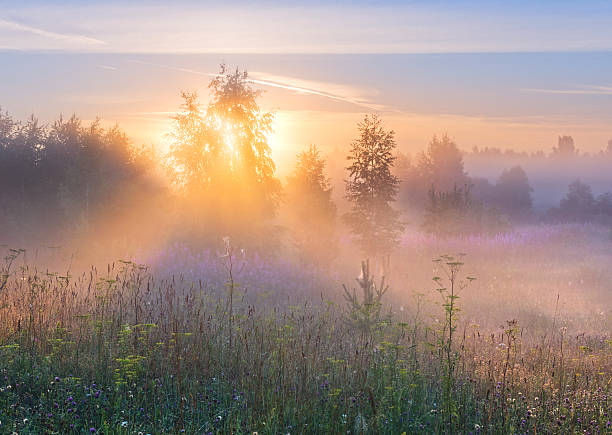 Sun's rays in fog through branches of tree. stock photo