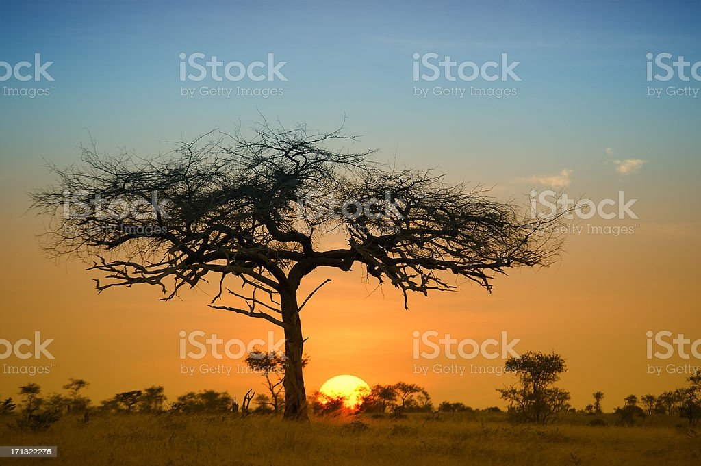 Sunset after a Safari-day in East Africa stock photo